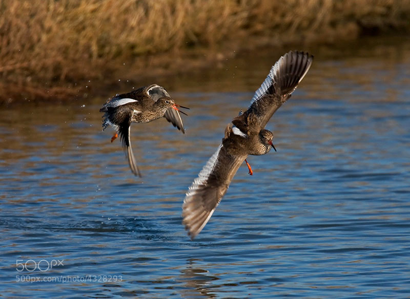 Photograph the chase  by dave blackwell on 500px
