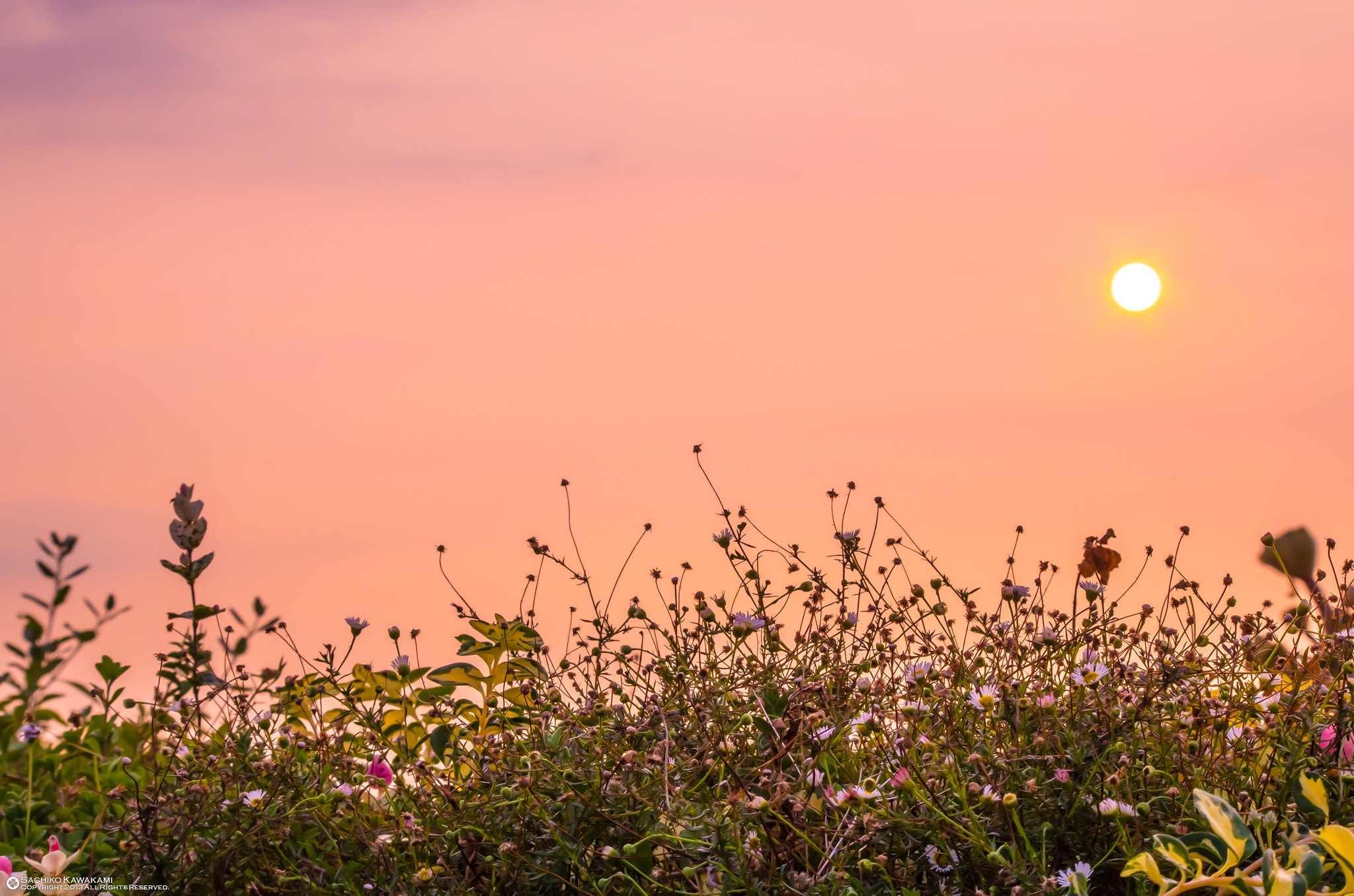 Photograph Flowers and sunsets by Sachiko Kawakami on 500px