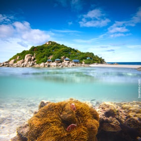 Corals, clownfish and palm island - half underwater shoot. Thail by Roman Barelko on 500px.com