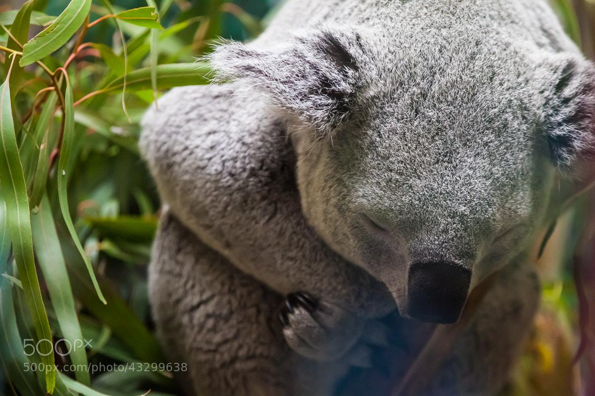 Photograph Sleepy by Jonathan Howard on 500px