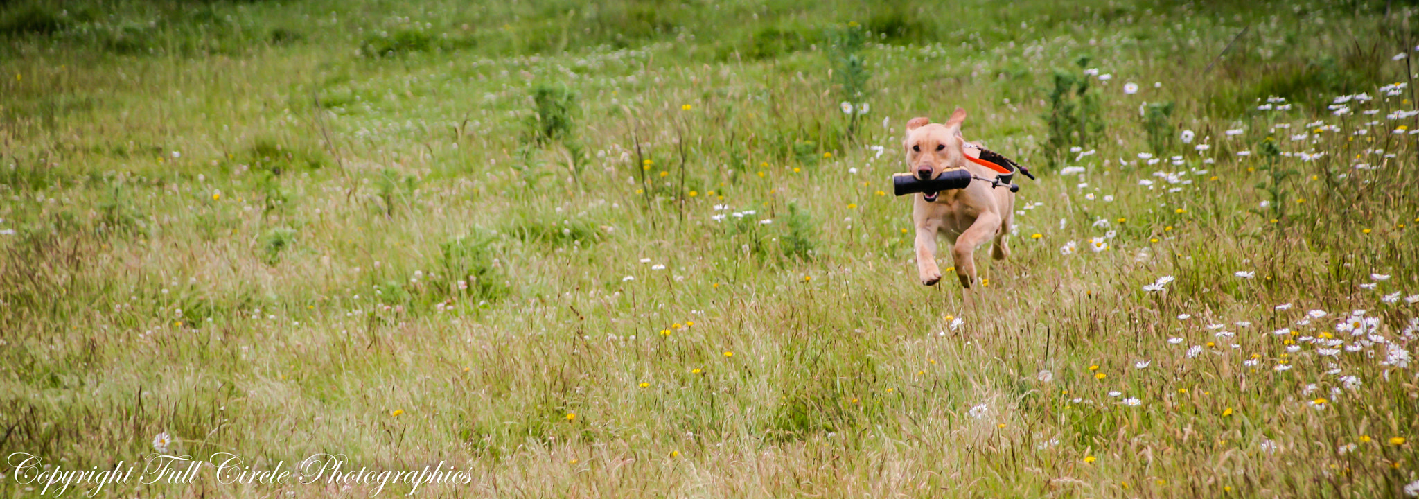 Photograph Fetch III by Pandyce McCluer on 500px