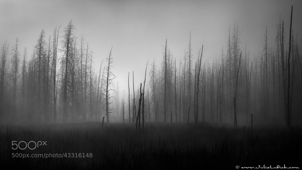 Photograph Burned Trees and Fog by Julie Lubick on 500px
