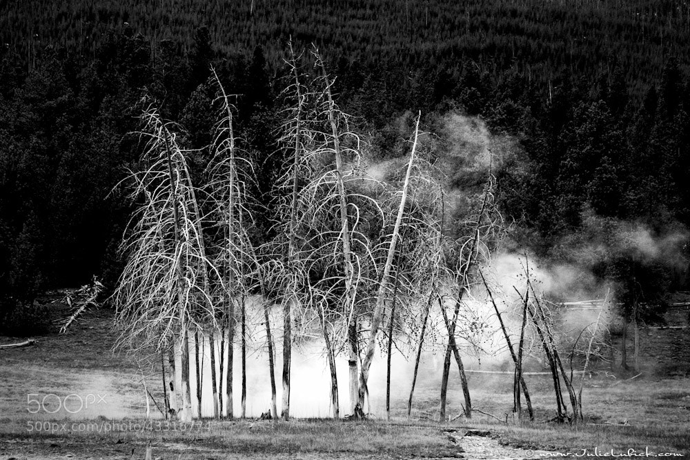 Photograph Ghost Trees by Julie Lubick on 500px