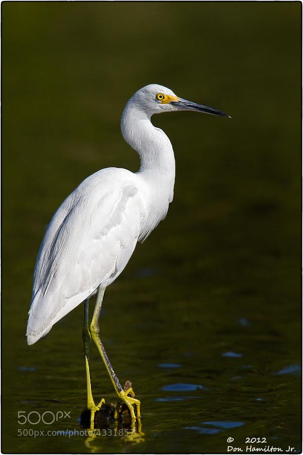 Photograph Everglades-White by Don  Hamilton Jr. on 500px