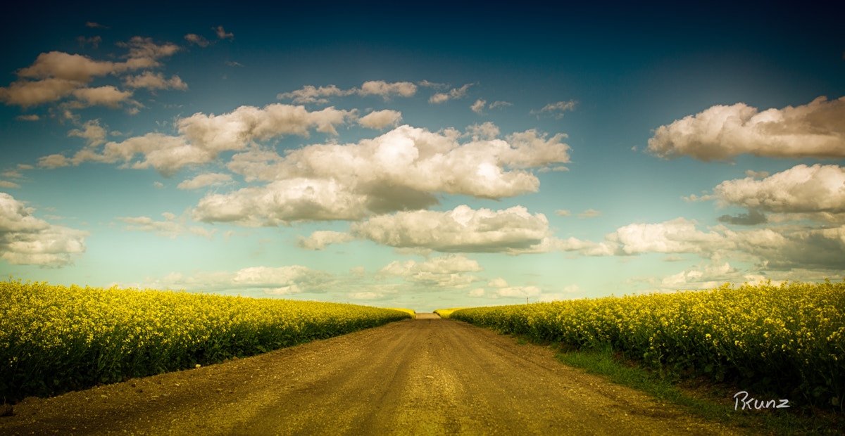 Photograph Canola Road by Rob Kunz on 500px