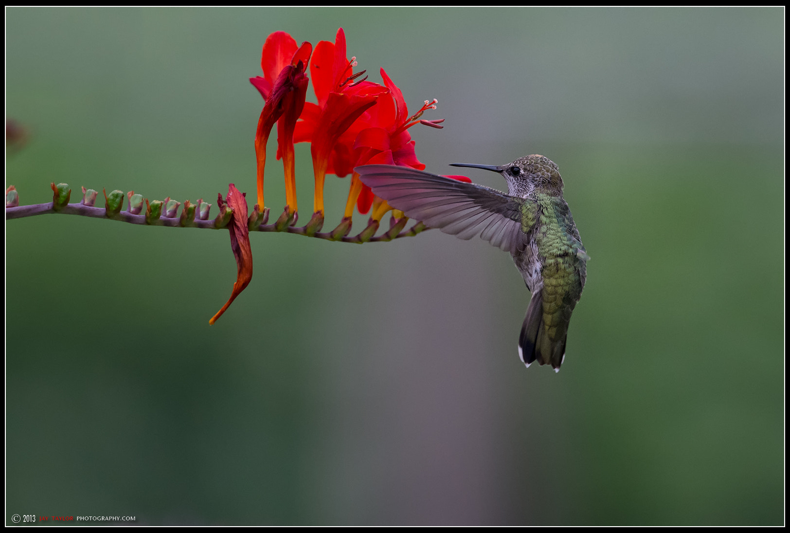 Photograph Ho' Hummer by Jay Taylor on 500px