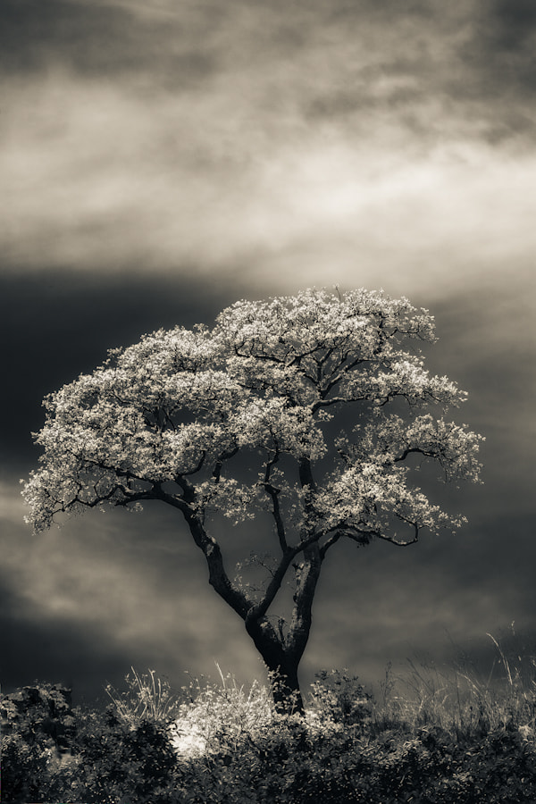 Photograph A Tree ... by Mario Moreno on 500px