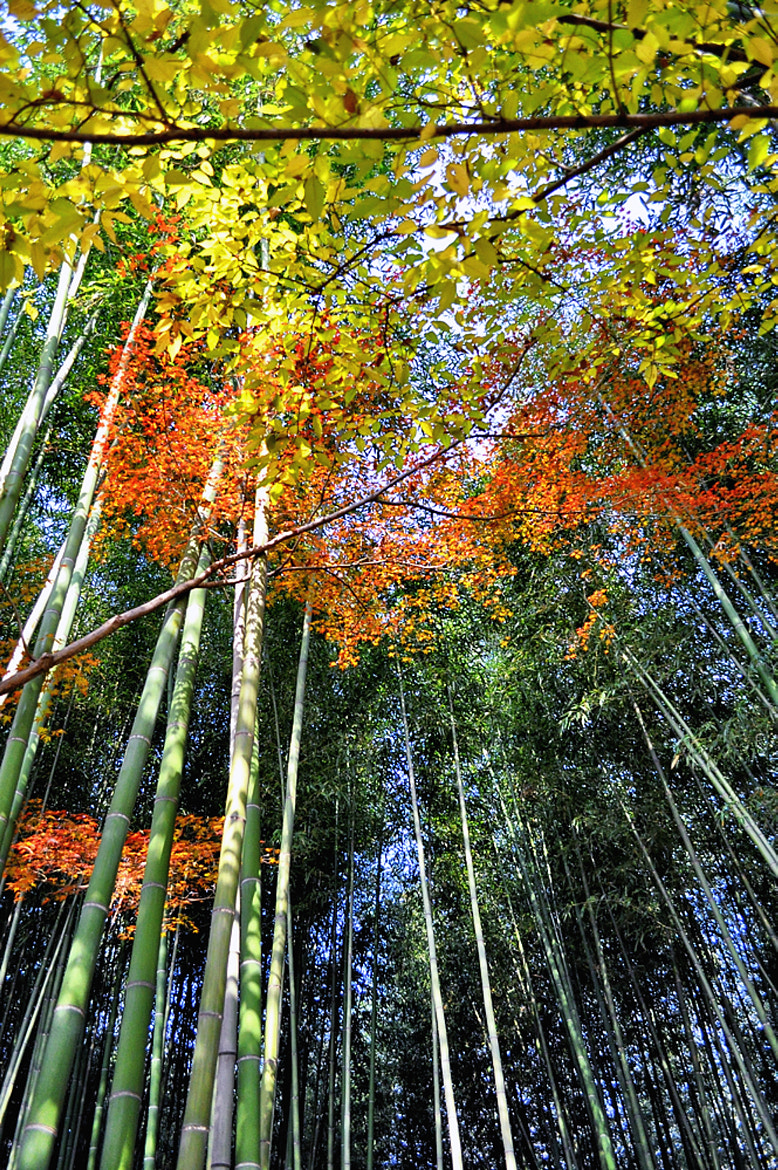 Photograph bamboo by keiji 403 on 500px