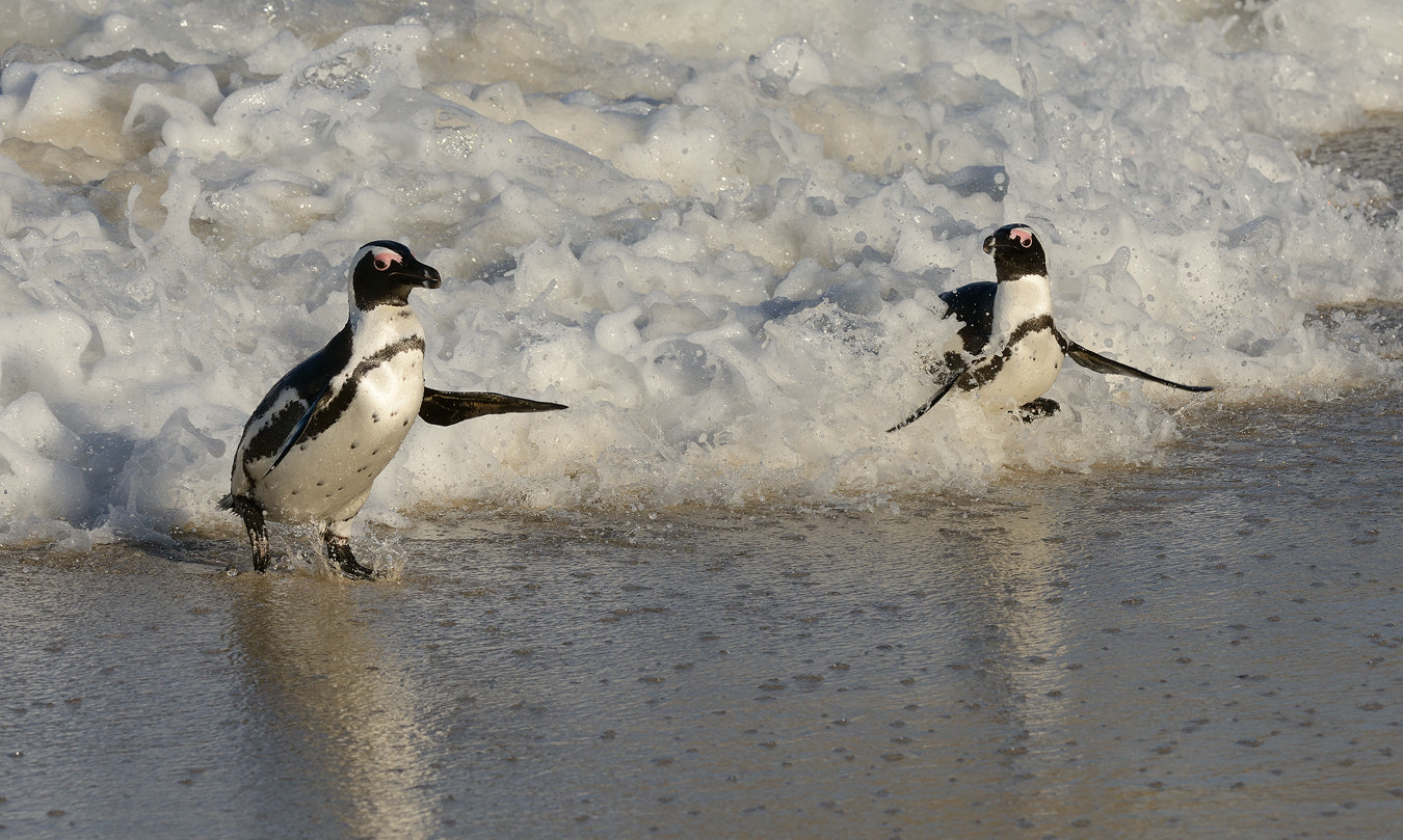 Photograph Look at my Surfing Brother by Harry  Eggens on 500px