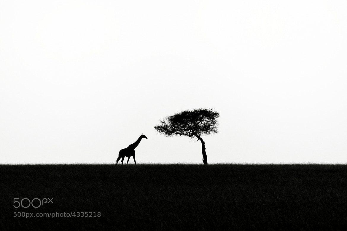 Photograph Dreaming of Africa by Michael Siward on 500px
