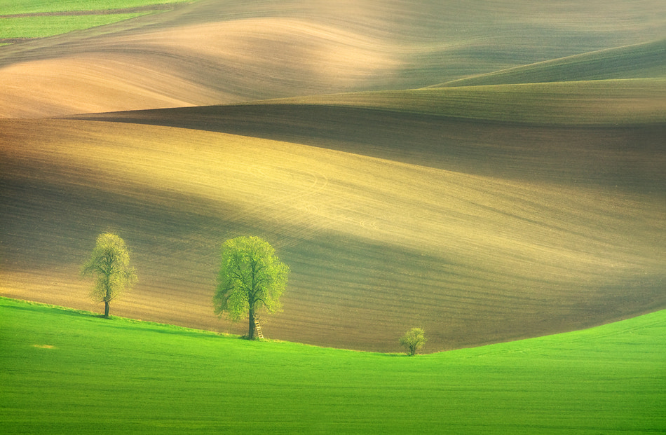 Photograph Chestnut family by Marcin Sobas on 500px