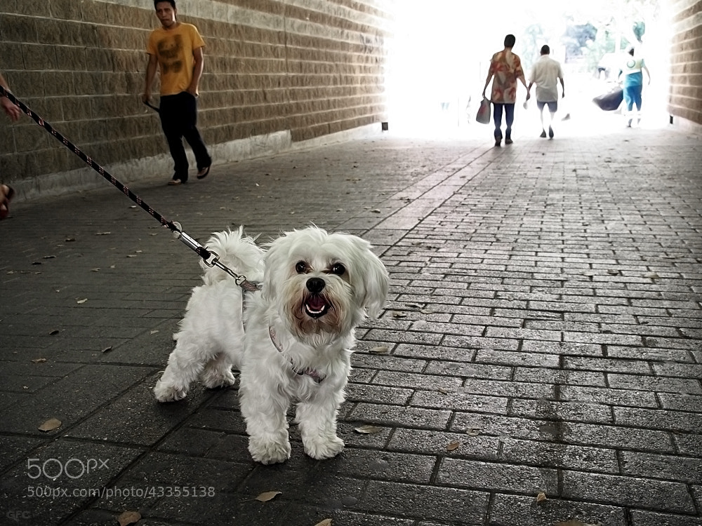 Photograph Dogs Life VI by Gemma  on 500px