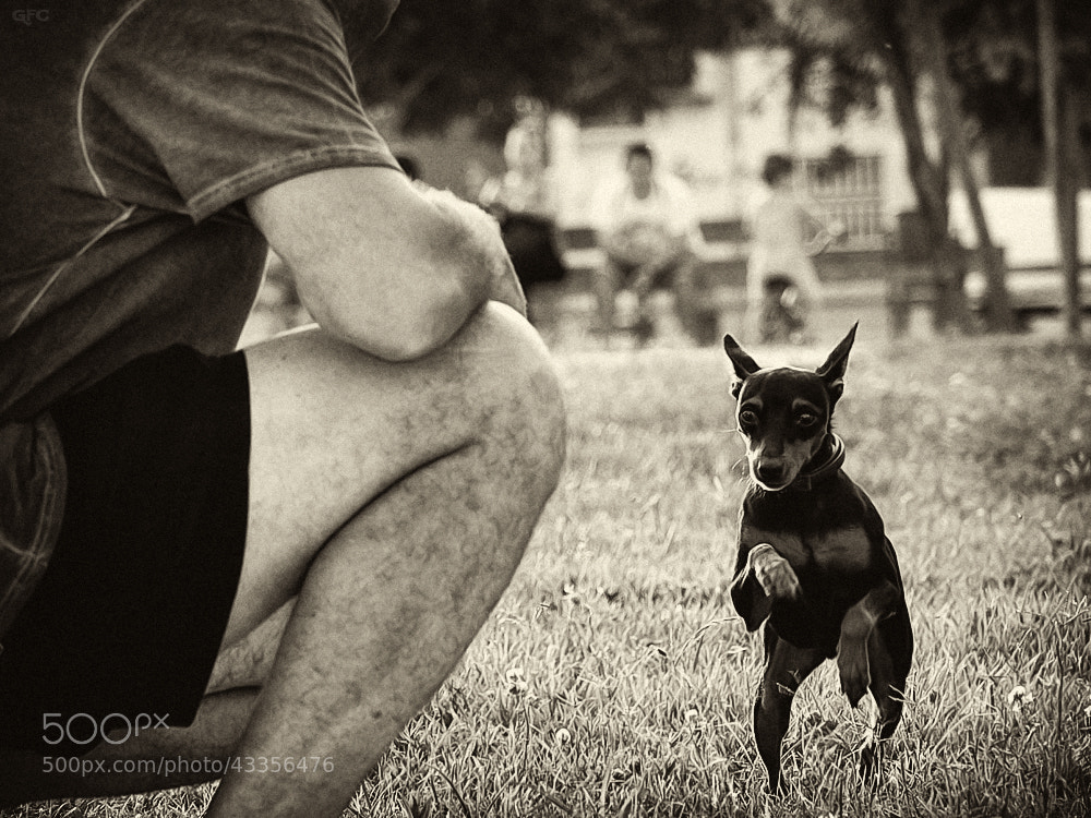 Photograph Dogs Life VII by Gemma  on 500px
