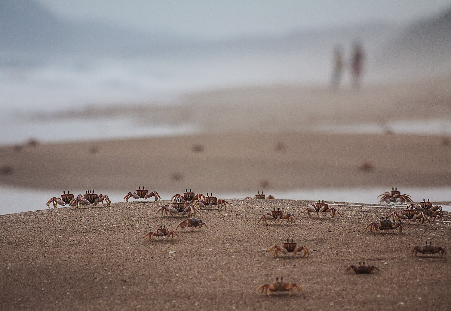 Photograph World of crabs by Andrey Sidorov on 500px