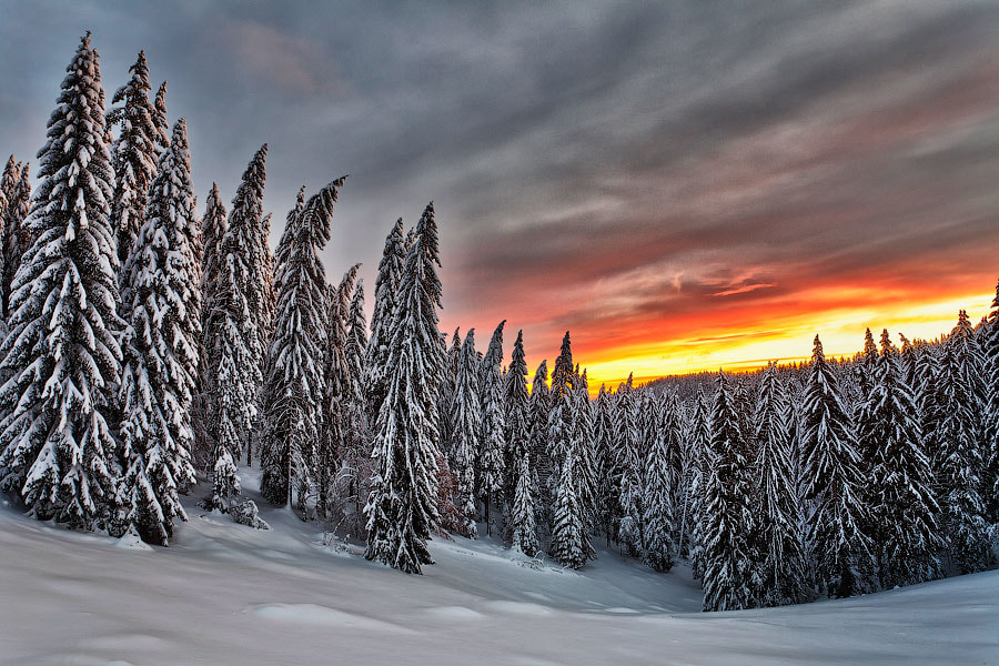 Photograph Winter Sunrise by Evgeni Dinev on 500px