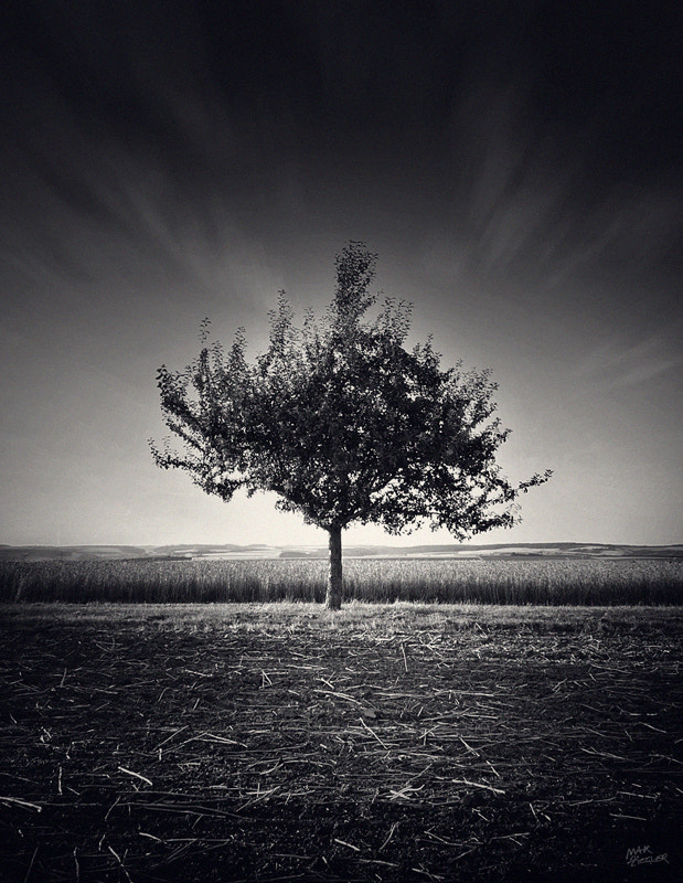 Photograph the lonely tree 06 b&w by Max Ziegler on 500px