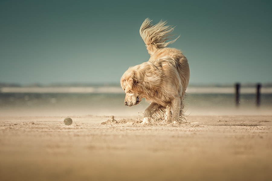 Photograph beachball by Danny Block on 500px