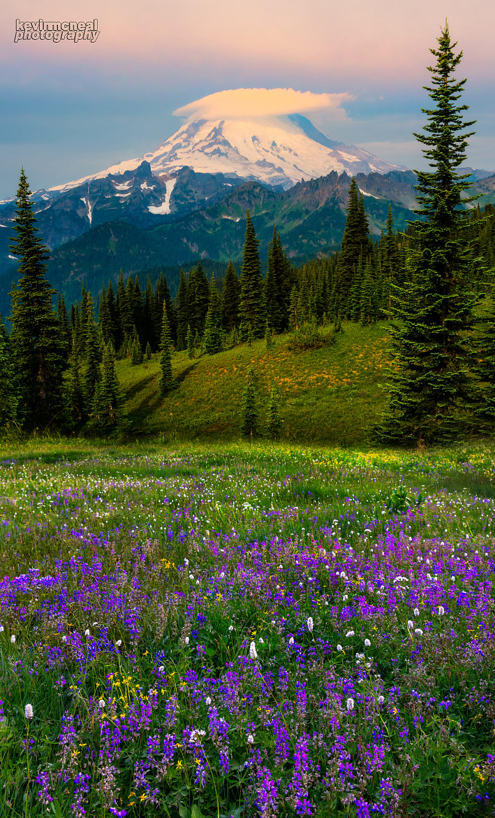 Photograph Mount Rainier Wildflowers by Kevin McNeal on 500px
