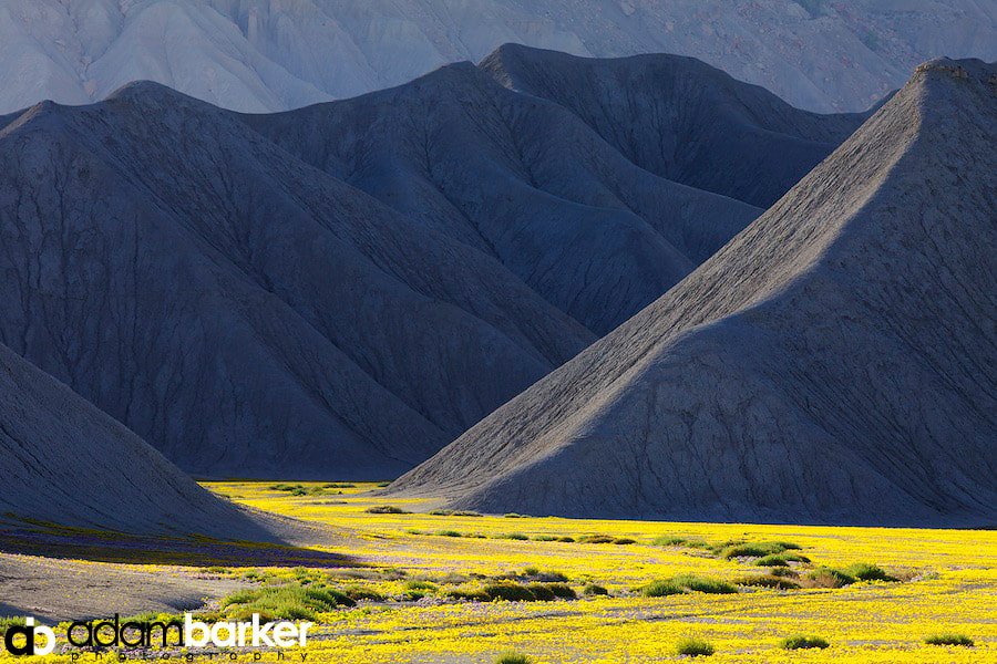 Photograph River of Gold by Adam Barker/AdamBarkerPhotography.com on 500px
