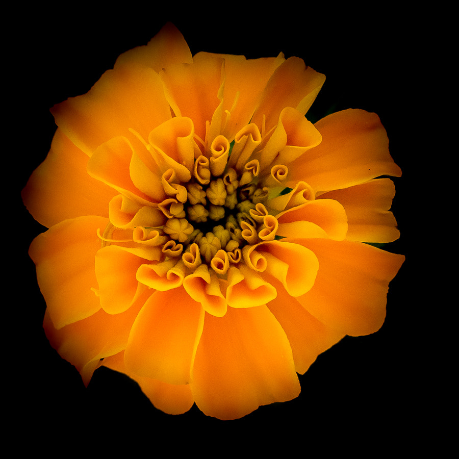 Photograph Study in Orange by Stevan Tontich on 500px