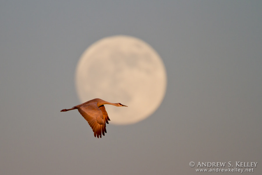Photograph Crane and Full Moon by Andrew Kelley on 500px