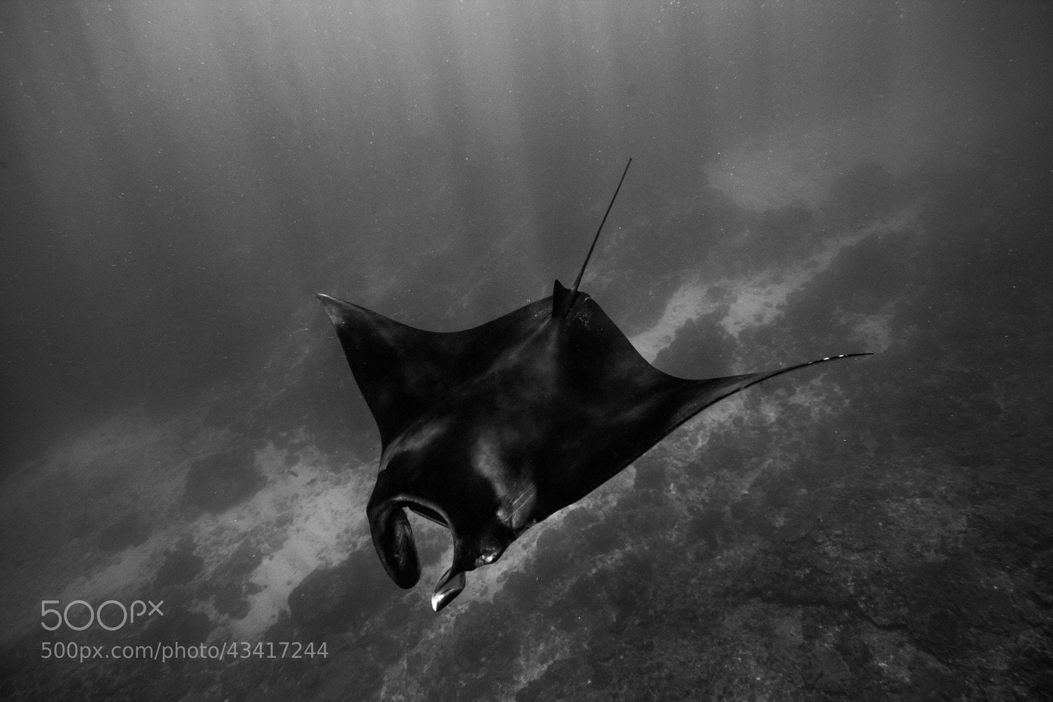 Photograph Glidin' by Gareth Neufeld on 500px