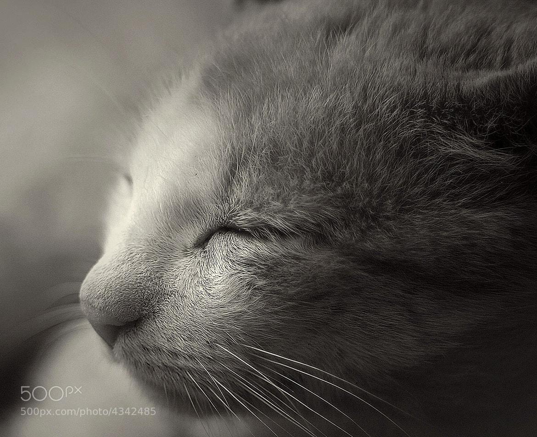 Photograph Sweet Dreams by Gabriel Gajdoš on 500px