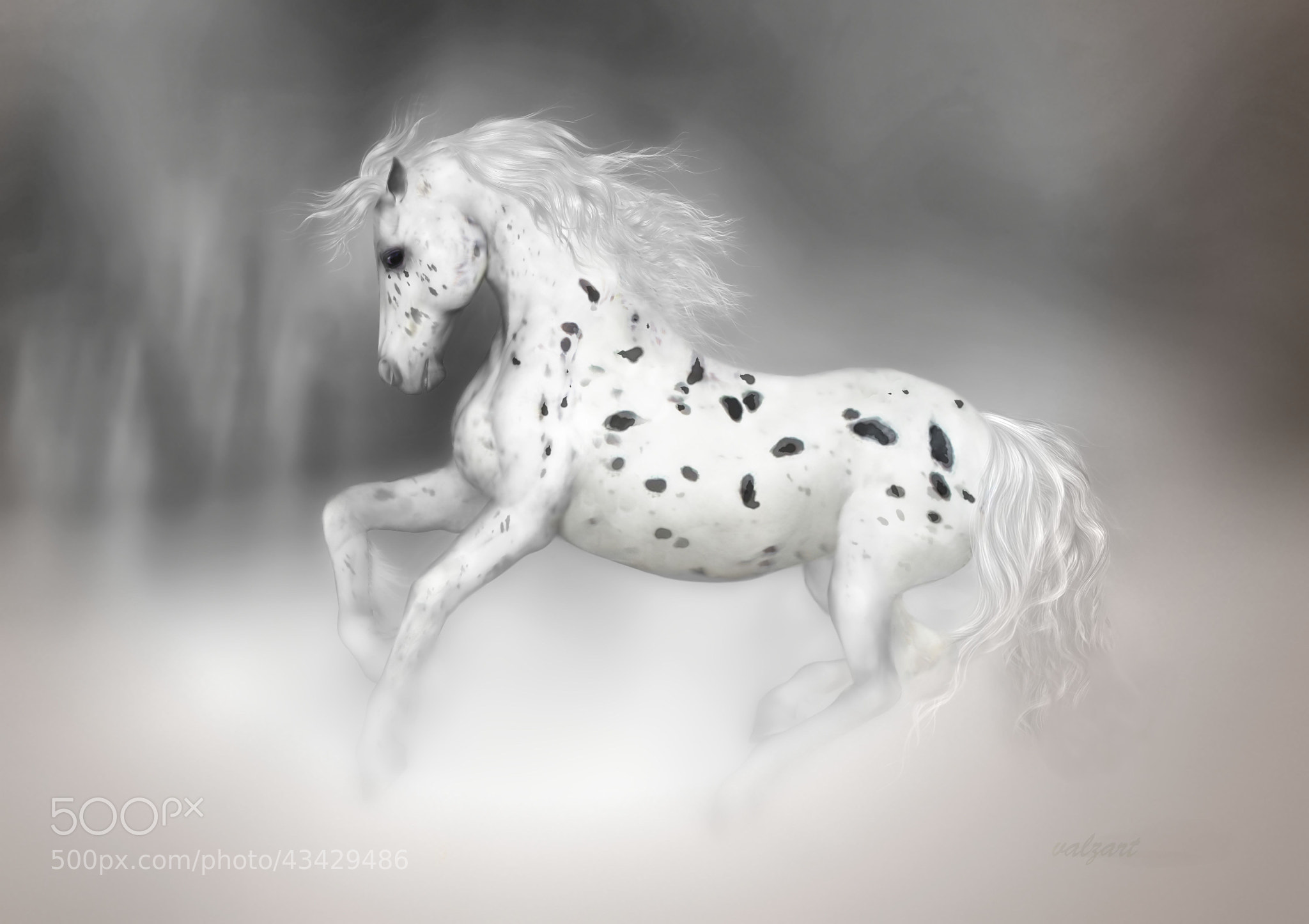 Photograph The Appaloosa by Valerie Anne Kelly on 500px