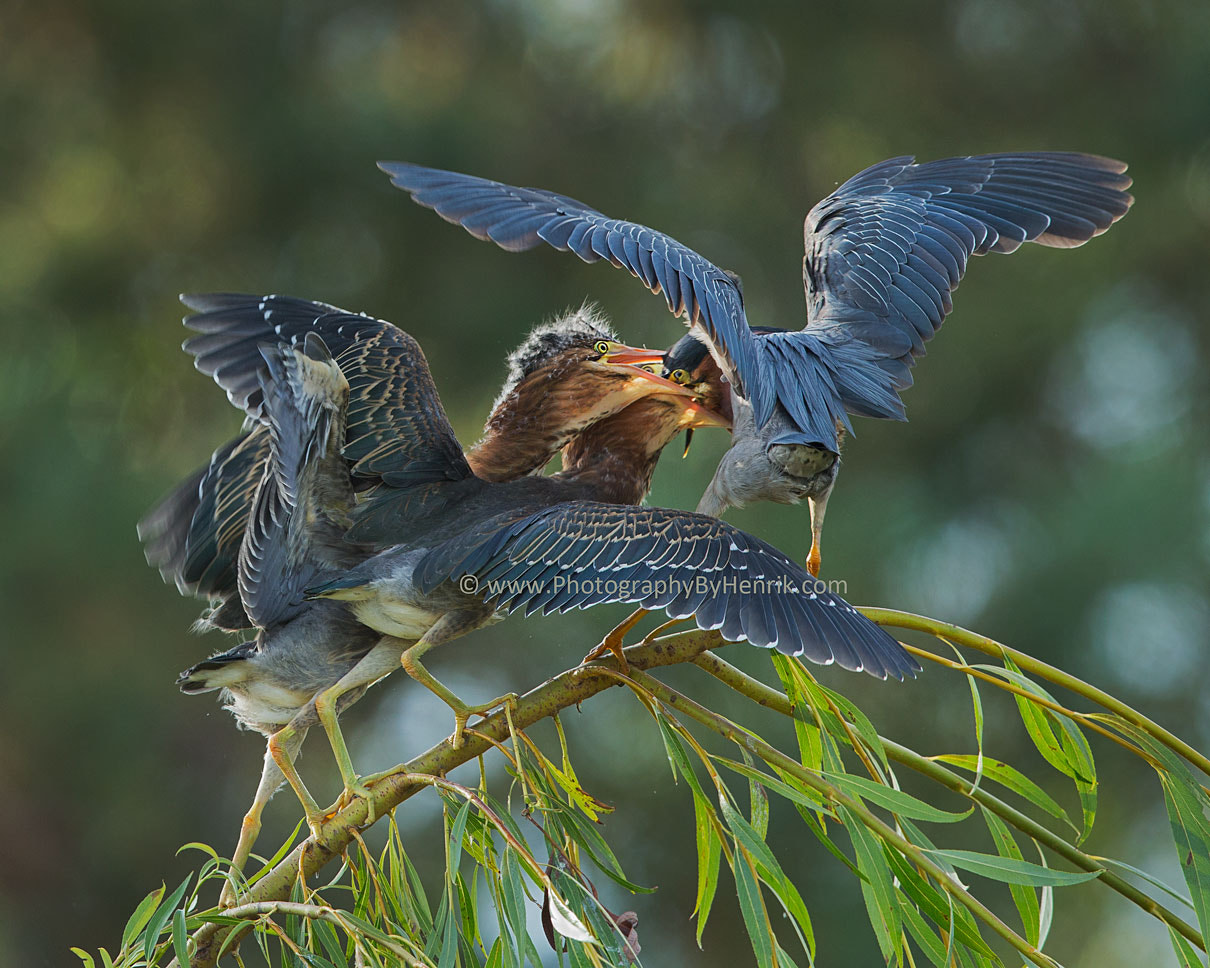 Photograph Easy on Mom by Henrik Nilsson on 500px