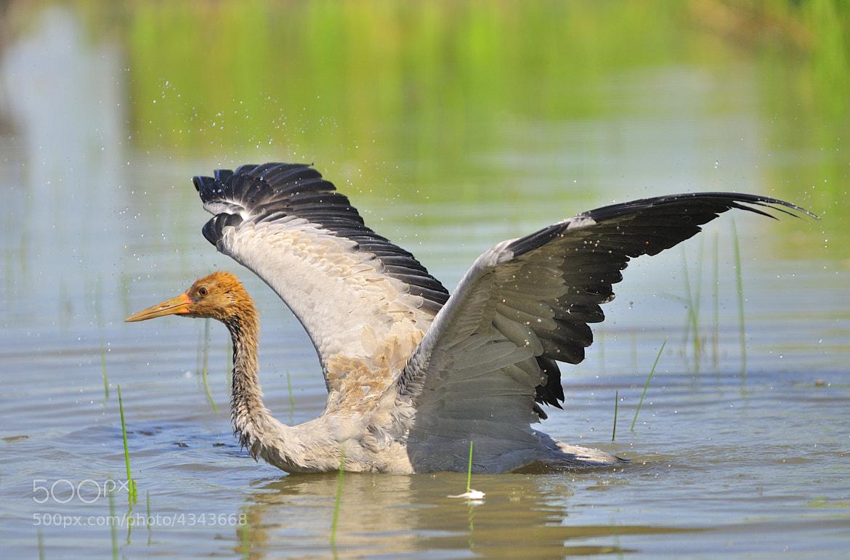 Photograph Big Bird by Csilla Zelko on 500px