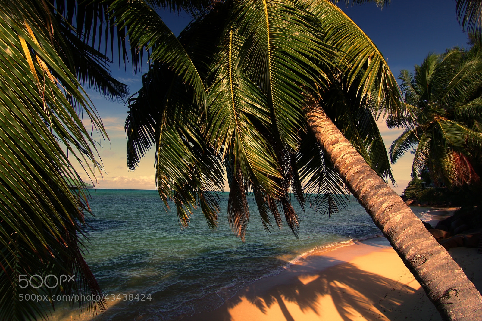 Photograph Sunset palm by Andrei Fried on 500px