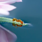 ant,water,flower