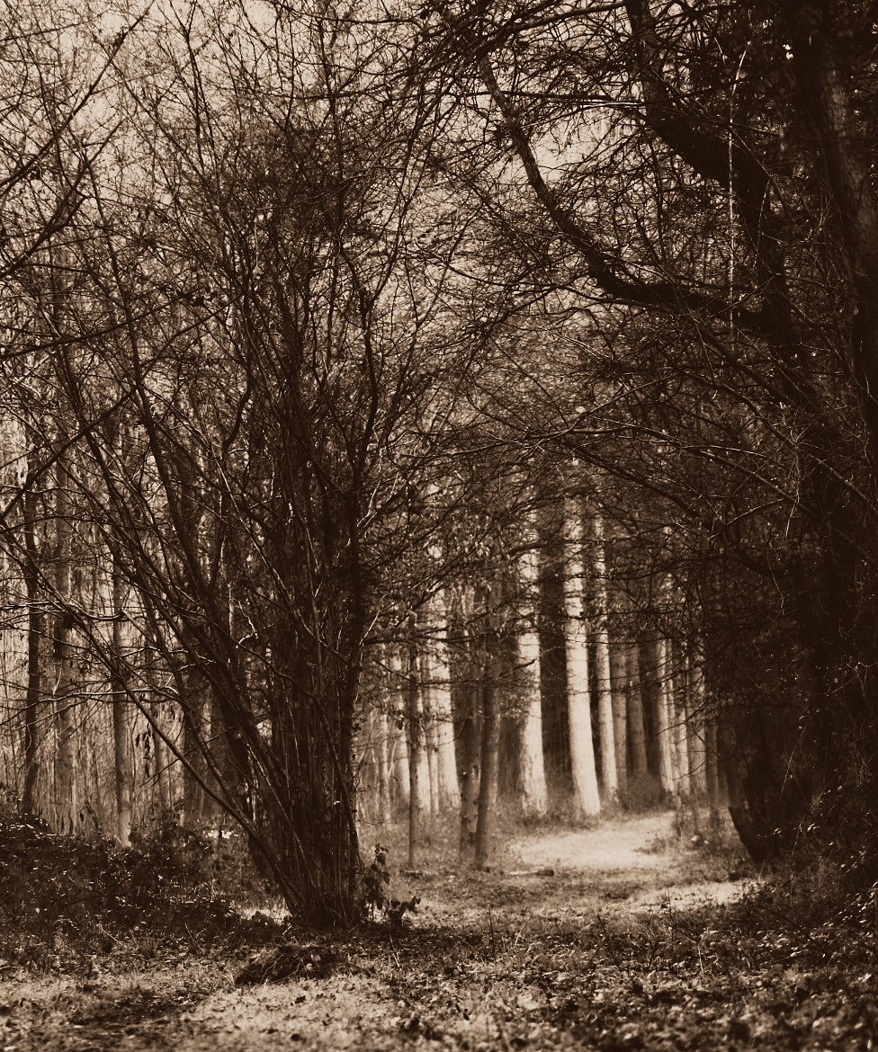 Photograph Huntley Woods by Nick Stewart on 500px