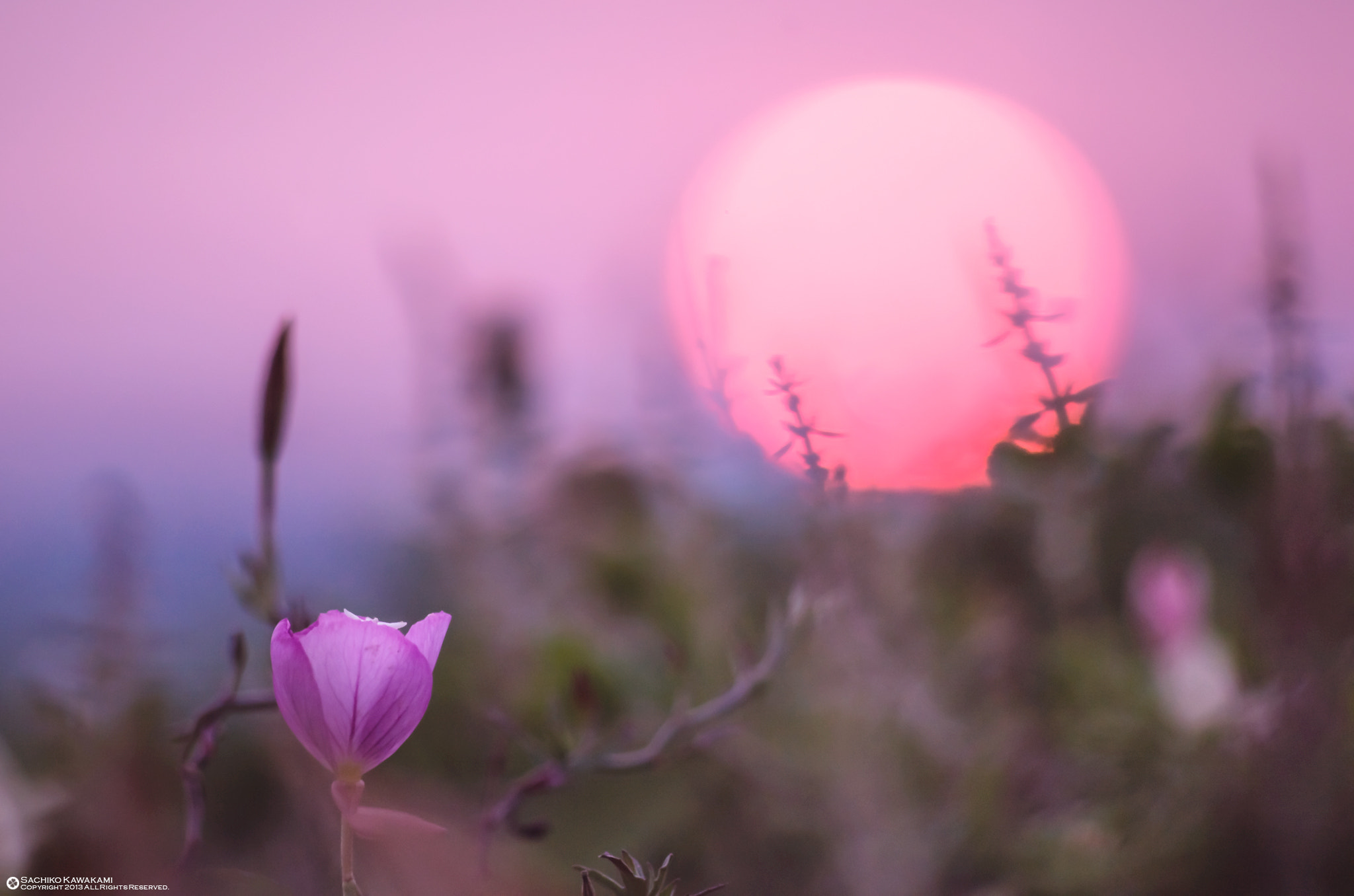Photograph Flowers and sunset by Sachiko Kawakami on 500px