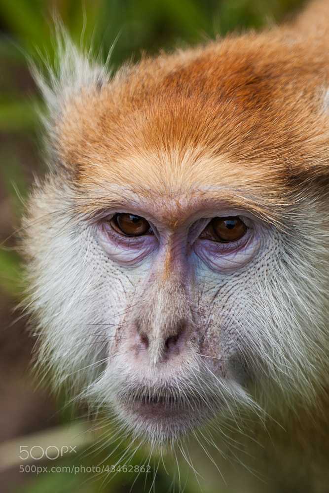 Photograph Eye Contact 3 by Jonathan Howard on 500px