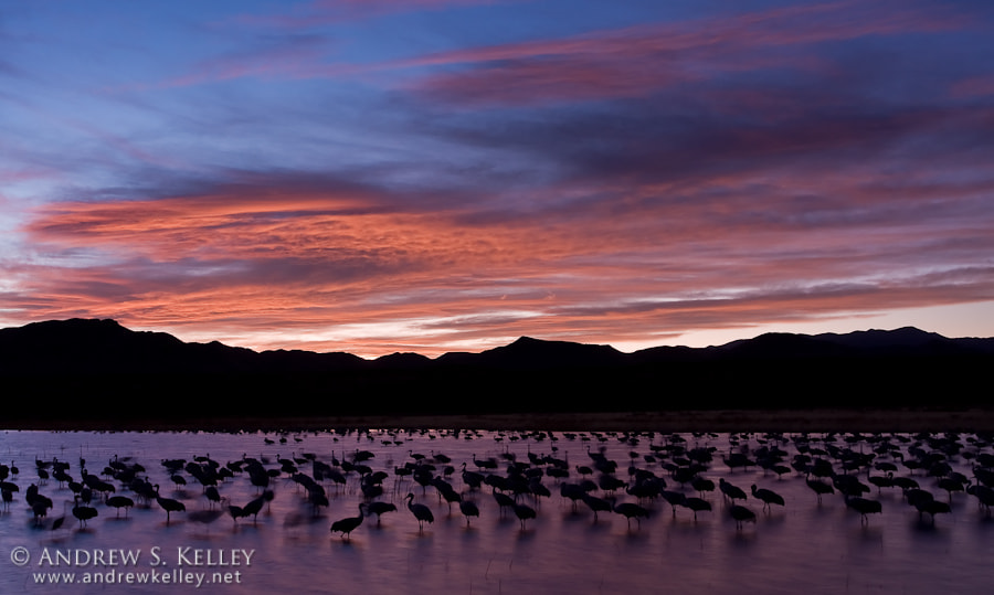 Photograph Crane Pool at Dusk by Andrew Kelley on 500px