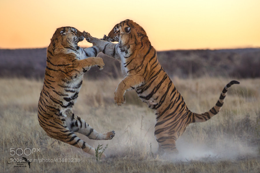 Photograph Touch by Marion Vollborn on 500px