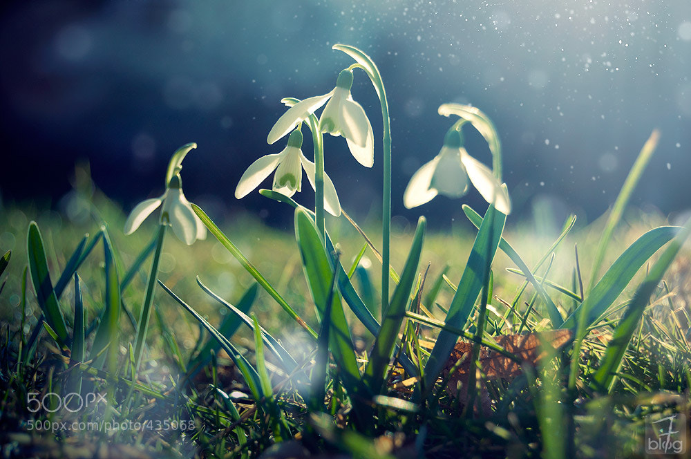 Photograph just like every year by Melanie Miedler on 500px