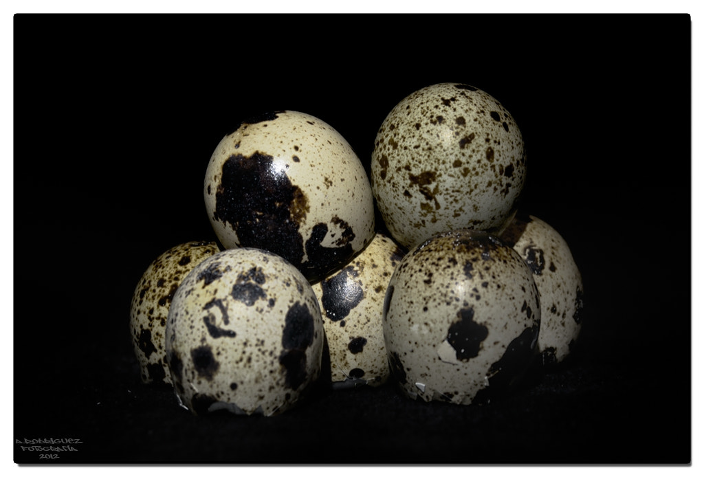 Photograph eggs by Alejandro Rodriguez on 500px