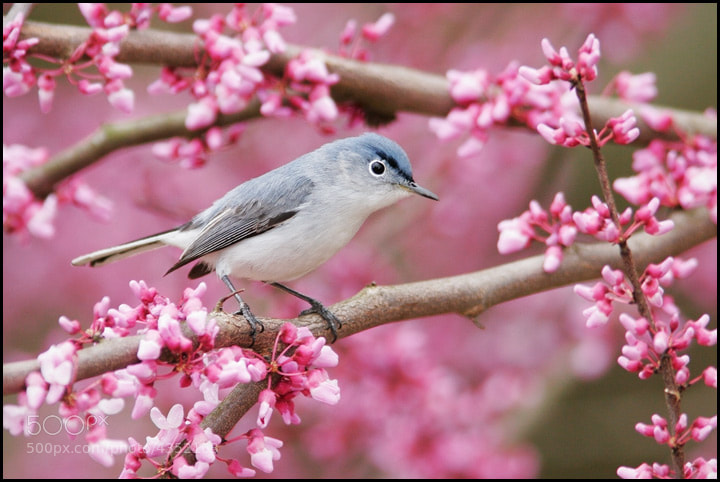 Photograph Spring is in the Air by Chris Kayler on 500px