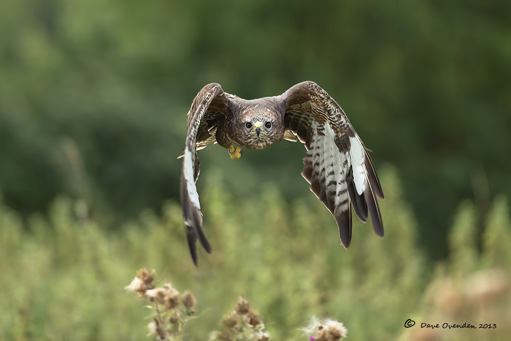 Photograph Head On by Dave Ovenden on 500px