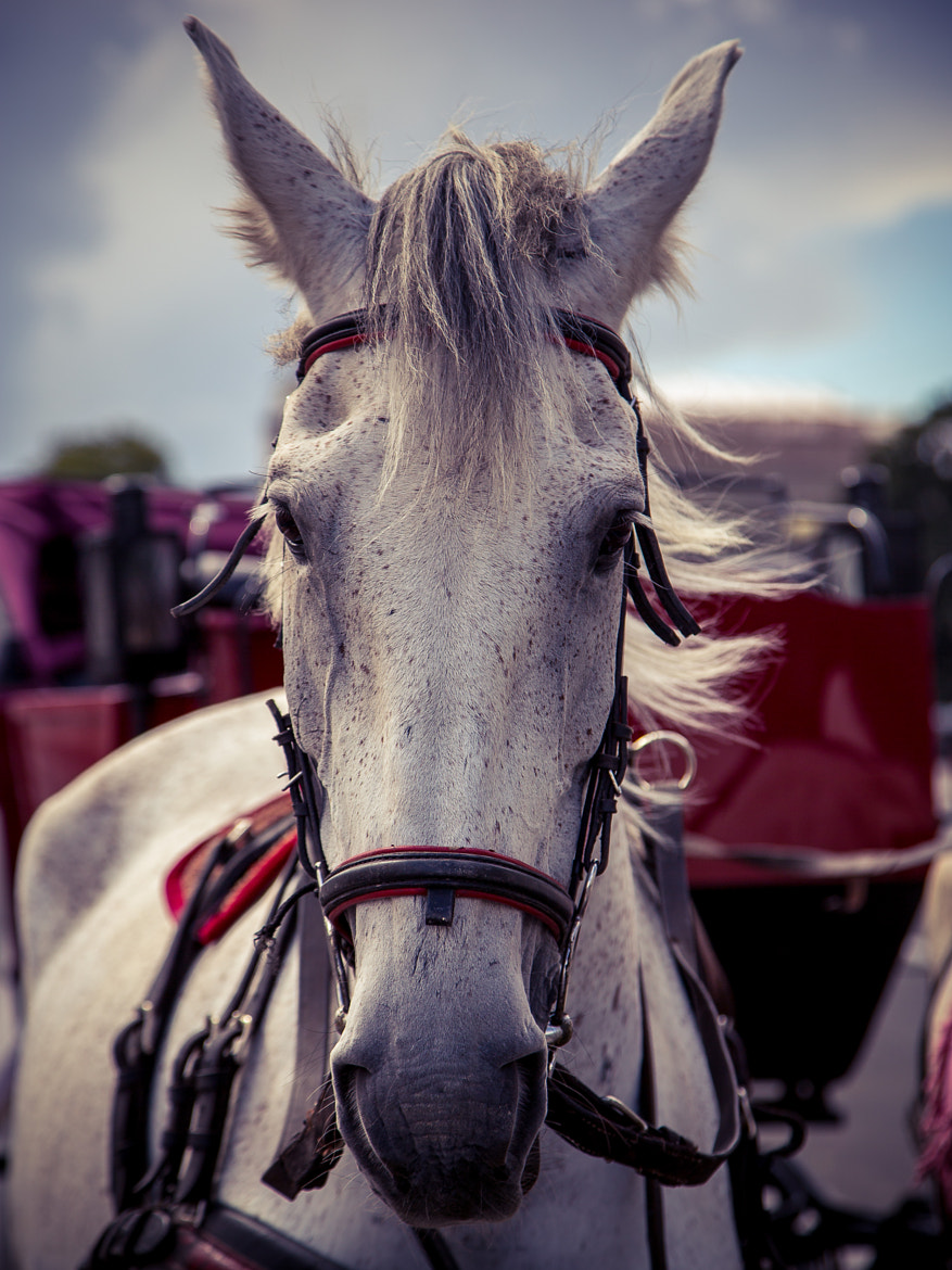 Photograph horse by Maxim Mironov on 500px