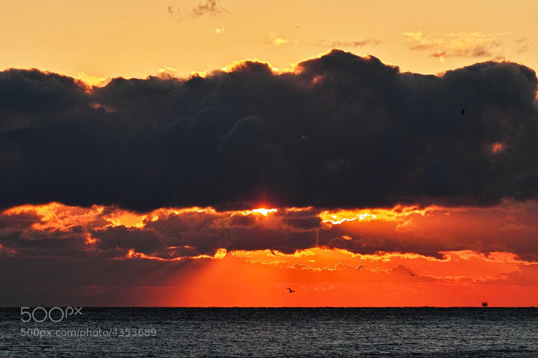 Photograph Golden Horizon by halfrain X3 on 500px