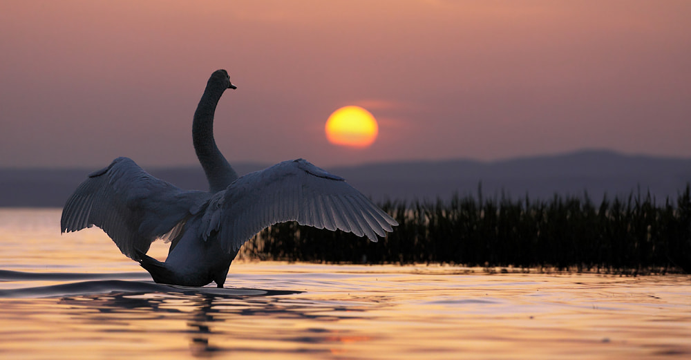 Photograph Farewell to the Sun by Hencz Judit on 500px