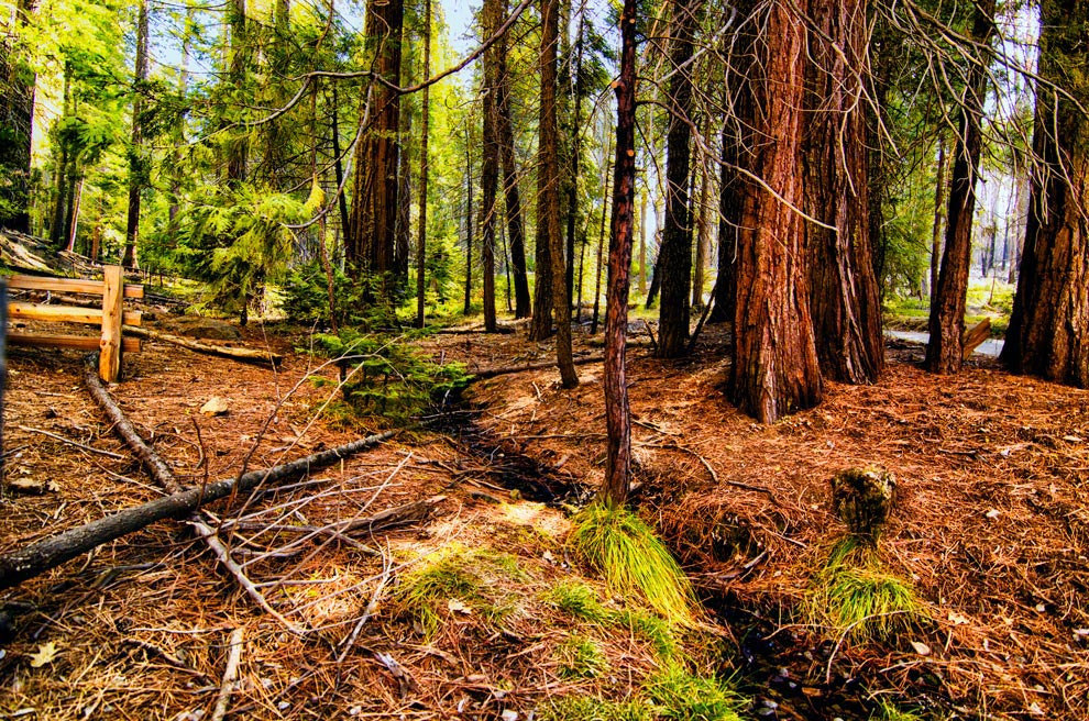 Photograph V irgin Woods by Greg McLemore on 500px
