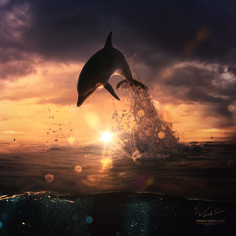 beautiful dolphin jumping from shining water de Vitaliy Sokol sur 500px.com
