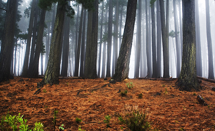 Photograph Forest Colours by Chris  Cloete on 500px