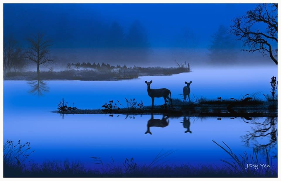 Photograph Deer by Joey Yen on 500px