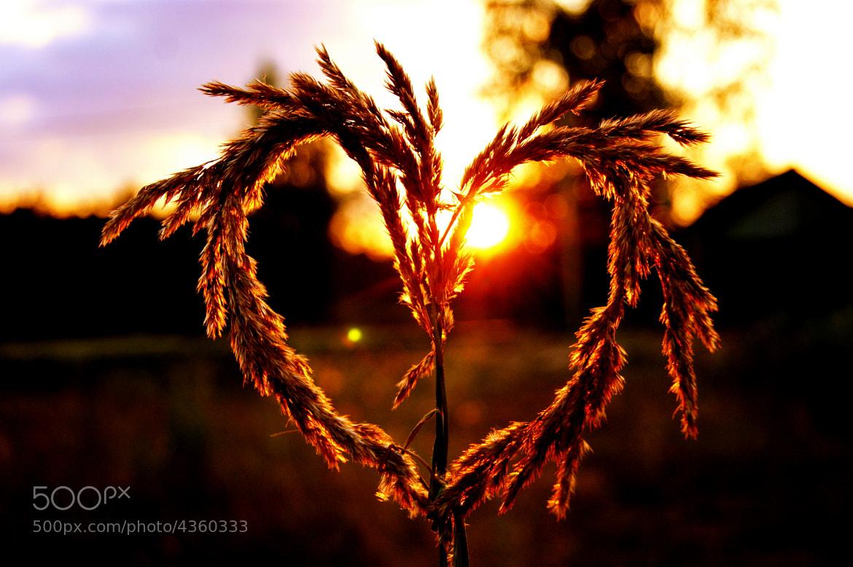 Photograph Love to life by Ekaterina Elizarova on 500px