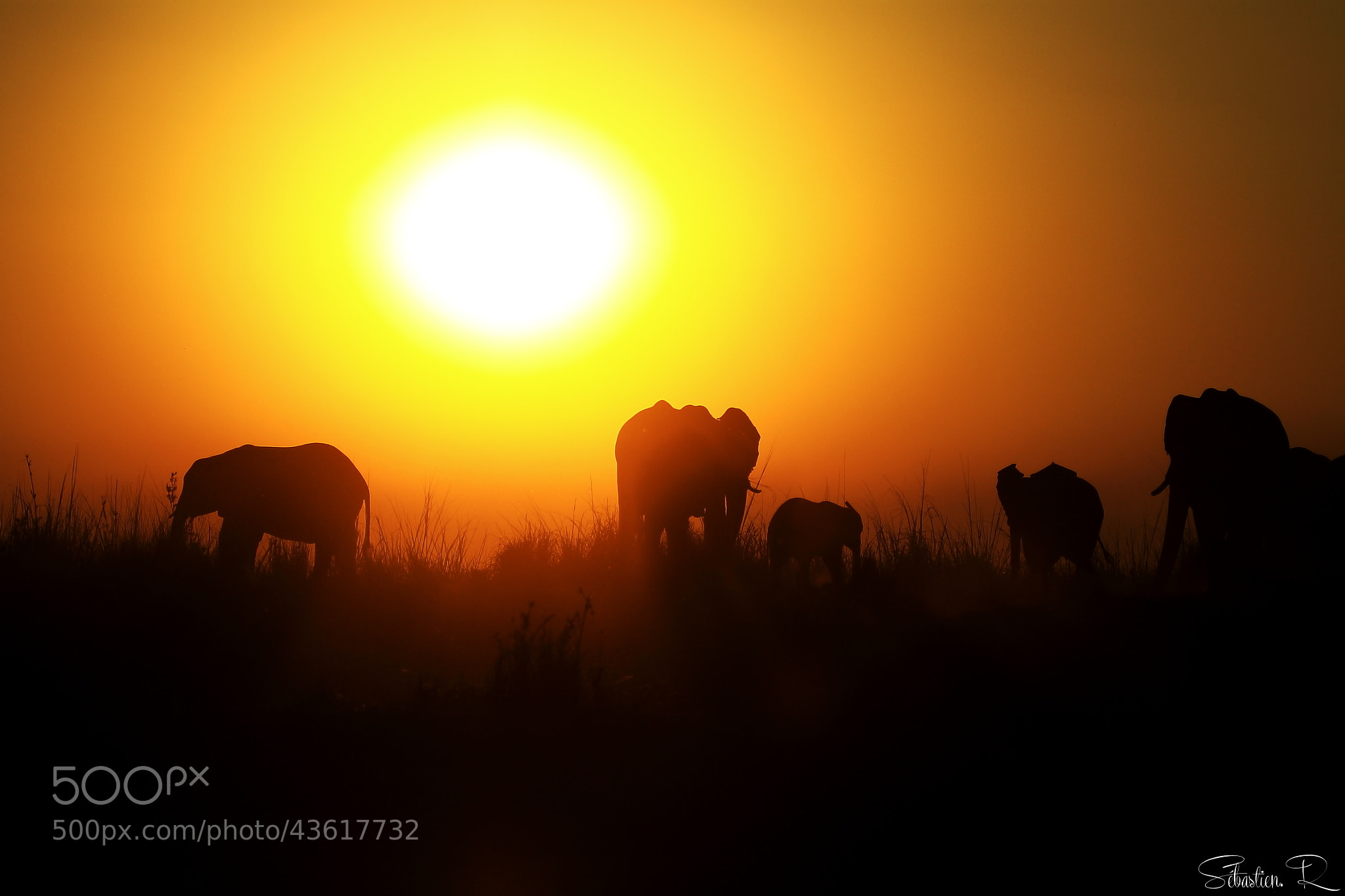 Photograph Elephant's walk by Sébastien Rodrigues on 500px